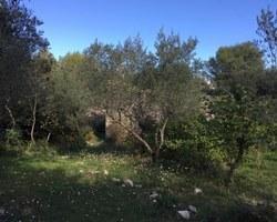 Laffont Immobilier - Nîmes - MAISON - TERRAIN 3000.00M2 - NIMES 30900